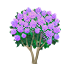 ライラック 紫