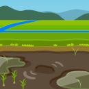 背景:田植え