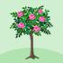 バラの木 ピンク