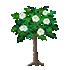 バラの木 白
