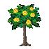 バラの木 黄
